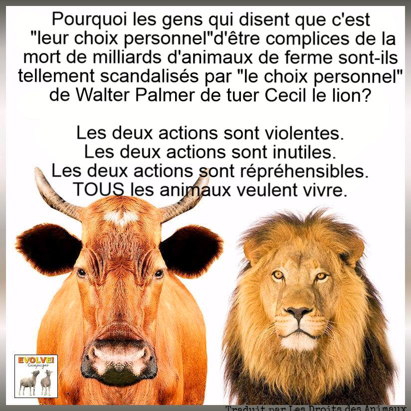 Cecil le lion, cecil the lion