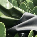 Cactus - Mode